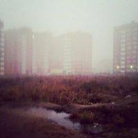 Туманное утро :: Валерия Иванова