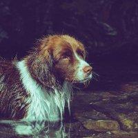 Пёс :: Дмитрий Долгих