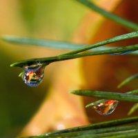 Яркость осени в росе :: sorovey Sol