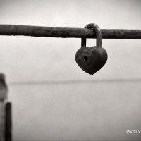 Сердце в тумане! :: Владимир Самышев