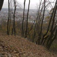 """""""В тенистых парках листьев шум..."""" :: Mishka-D2008 ( Мишкина )"""