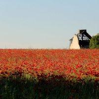 Маленькая Франция :: Катюша Драмарецкая