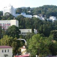 Сочи. Хоста - 2014 :: victor maltsev