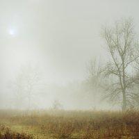 Туманное утро :: Мария Конкина