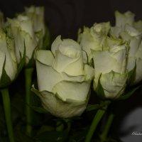 роза. :: סּﮗRuslan HAIBIKE Sevastyanovסּﮗסּ