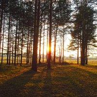 вечер в лесу :: Сергей Кочнев