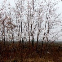 Поле в тумане... :: Тамара (st.tamara)