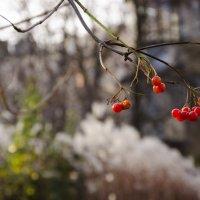 Осенние витамины :: Александра Мацина