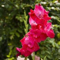 Цветок :: Александра Мацина