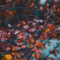 Природа живет своей жизнью в любое время года... :: Галина Мещерякова