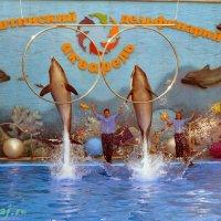 Дельфины :: Люда Свой край