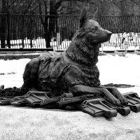 Памятник фронтовой собаке :: Владимир Болдырев