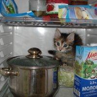 Котенок в холодильнике -)) :: Вадим Ростовский