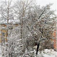 Из окна 15 ноября 2014 г. :: Владимир Михайлович Дадочкин