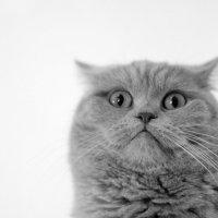 кошкин портрет. :: ака Японец
