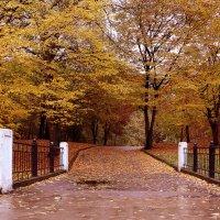 В осеннем парке :: Елена Сидорова
