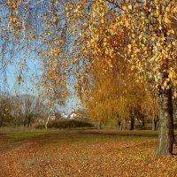 Золотая осень. :: Чария Зоя
