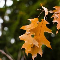 Осенний листок. :: Виктор Евстратов