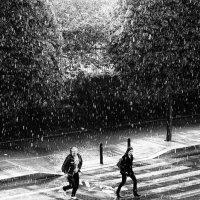 летний дождь :: Vladimir Zhavoronkov