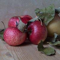 Вспоминая яблочный спас. :: Яков Реймер