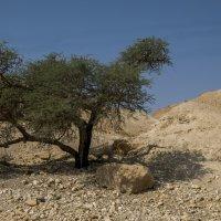 Пустынное дерево :: Николай Е