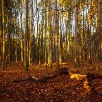 лес. :: Alexander Andronik