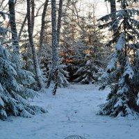 После  снегопада :: Геннадий С.