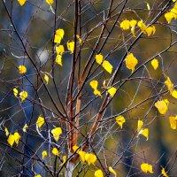 Пора листопадов :: николай матюшенков