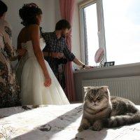 Приготовления к свадьбе .... а про меня все забыли...обидно. :: Damir Si