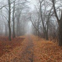 Туман :: Олег