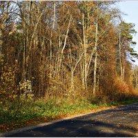 Лесная дорога. :: Валерия Комова