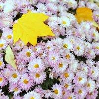 Осенние цветы. :: Татьяна Тимохина
