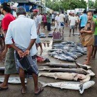 Рыбный рынок в Бентоте. :: Edward J.Berelet