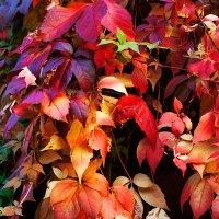 Осень... :: gutgesehen