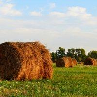 Стожки в поле :: Окcана Гетманец