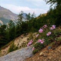 горные цветы :: Vladimir T