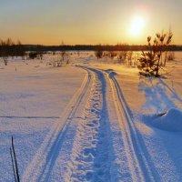 санный путь на закат :: Светлана