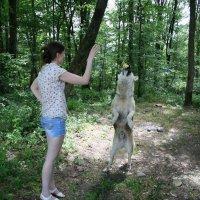 Але - Оп! :: Tata Wolf