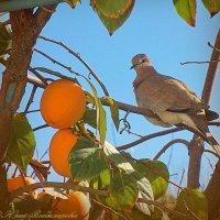 в моём садике :: Юрий Владимирович