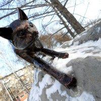 Металлический кот :: Denis Sorochan