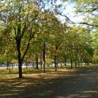 Осенним теплым днем :: Татьяна Пальчикова