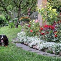 Садовник :: Мария Кондрашова