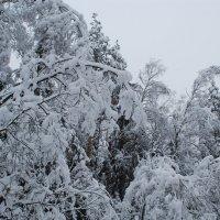 Снежно :: Вера (makivera)