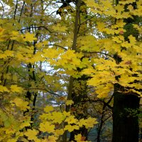 про Осень.... :: Gala Sarychev