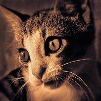 Молодой кот :: Цветков Виктор Васильевич