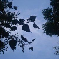 Листва на фоне неба :: Инна Буяновская