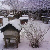 Пасека зимой :: BoxerMak Mak