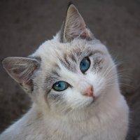 Бездомный котёнок :: Светлана Росинская