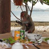 Обед обезьяны :: Владимир Бедак