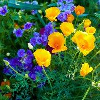 в цвете :: Алексей Белик